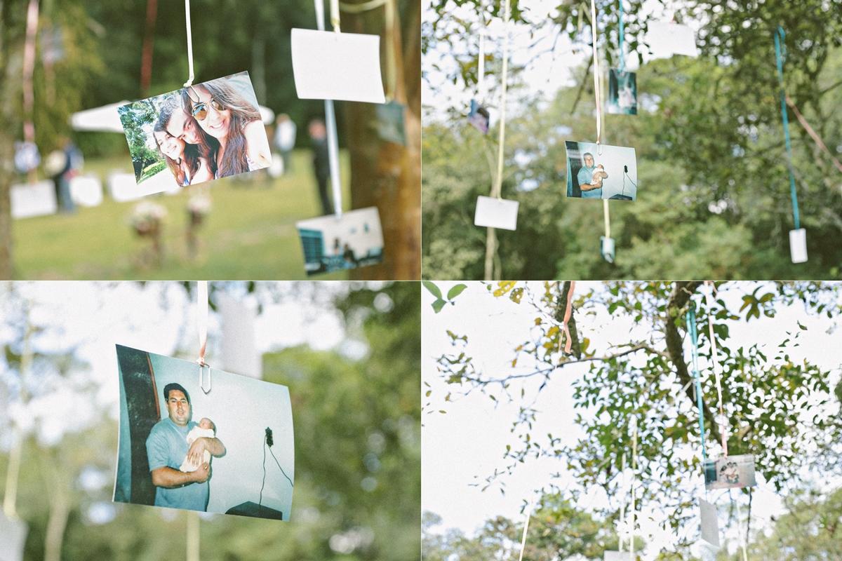 fotos na árvore